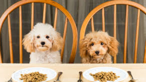 Should dogs be on a raw food diet?