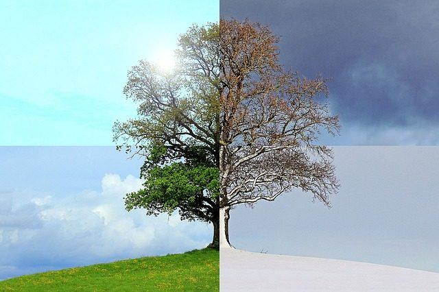 Summer Or Winter